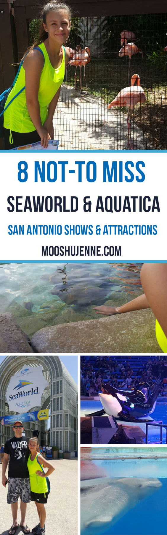 8 not-to miss SeaWorld & Aquatica San Antonio Shows & Attractions