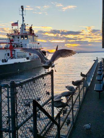 Seattle Waterfront Pier