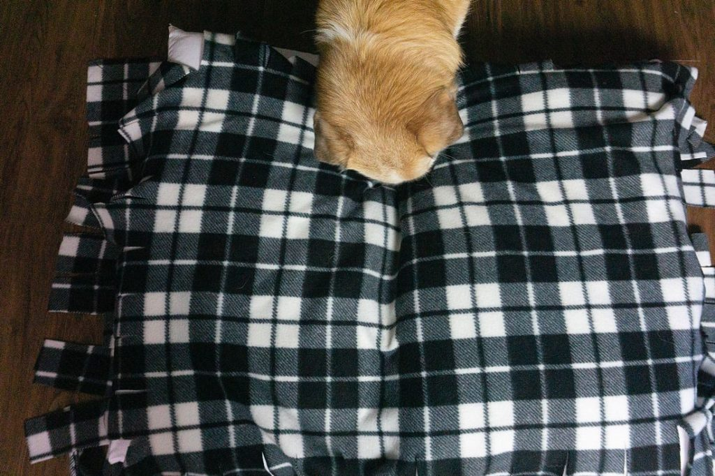 Dog trying to lay on fleece bed