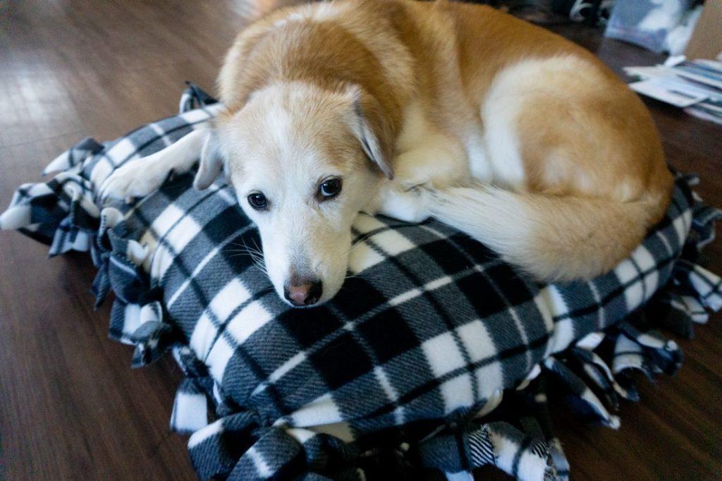 No Sew Buffalo Plaid Dog Bed