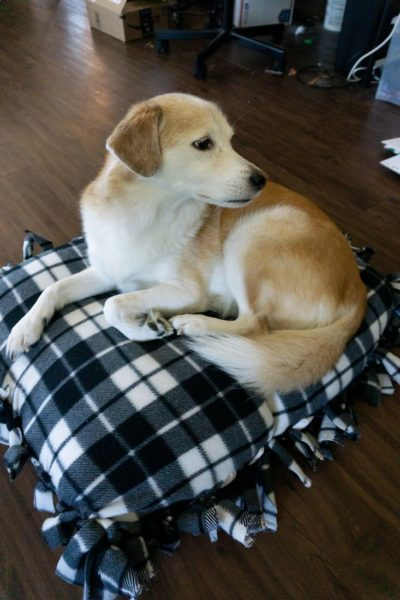 No Sew Buffalo Plaid Dog Bed